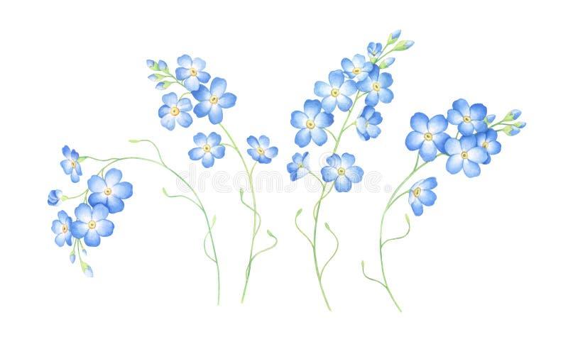 L'ensemble d'aquarelle de m'oublient pas des fleurs d'isolement sur le fond blanc illustration stock
