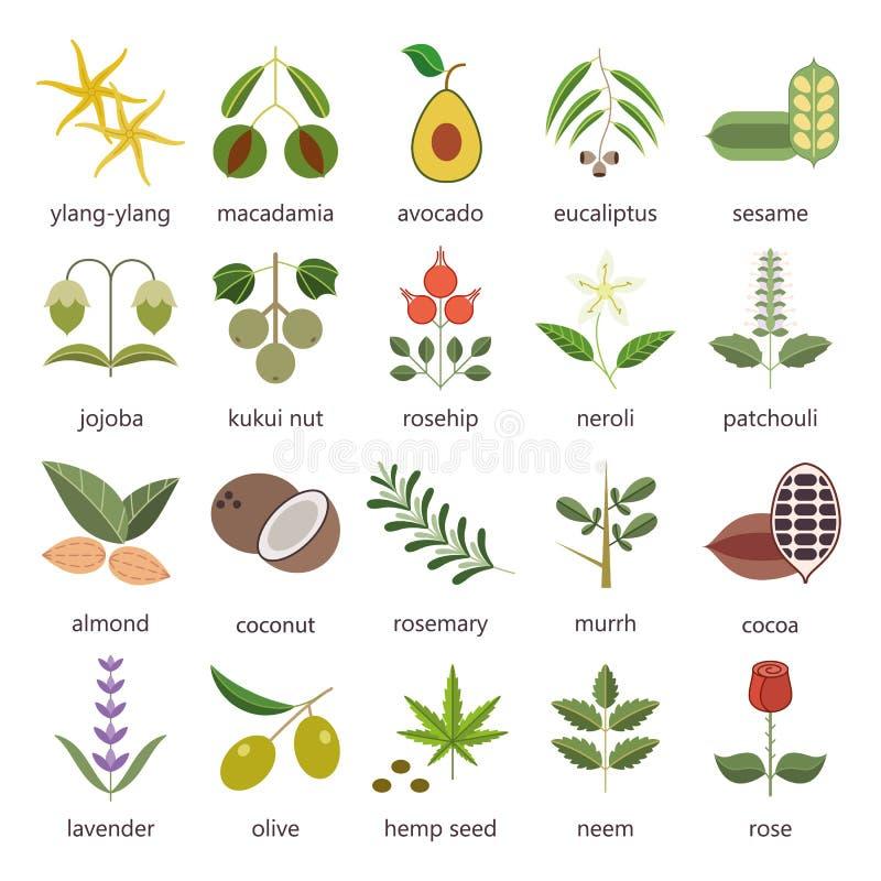 L'ensemble d'herbes et les usines colorent les icônes plates utilisées dans les cosmétiques et la médecine naturelle illustration stock