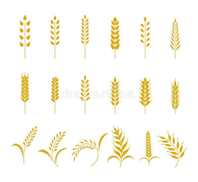 L'ensemble d'icônes simples d'oreilles de blés et le grain conçoivent des éléments pour la bière, nourriture fraîche de ferme loc illustration de vecteur