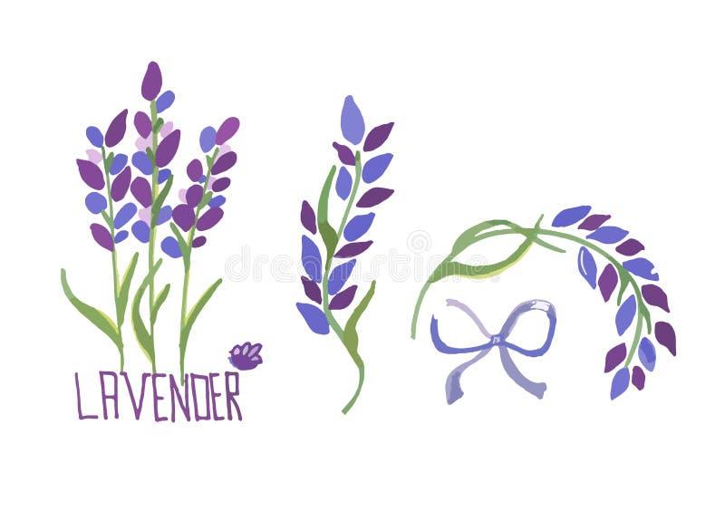 L'ensemble d'illustration de vecteur de lavande fleurit des ?l?ments Les illustrations botaniques de la lavande s'embranche dans  illustration de vecteur