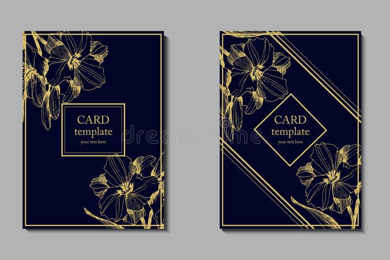 L'ensemble d'insectes, brochures, calibres conçoivent Cartes avec les modèles floraux illustration libre de droits