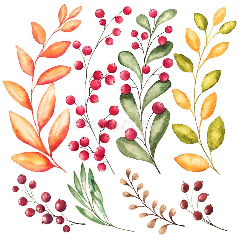 L'ensemble de 8 branches d'aquarelle avec des feuilles et les baies pour l'automne conçoivent illustration stock