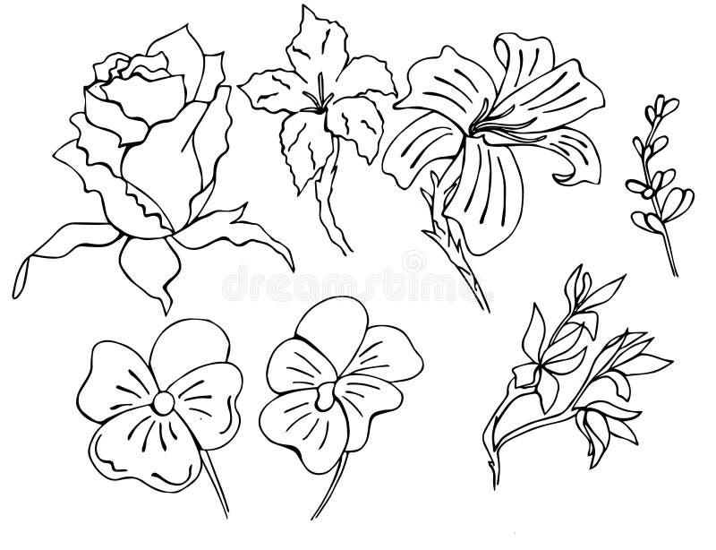 L'ensemble de fleurs tirées par la main dans le vecteur a exécuté dans le style de griffonnage illustration libre de droits