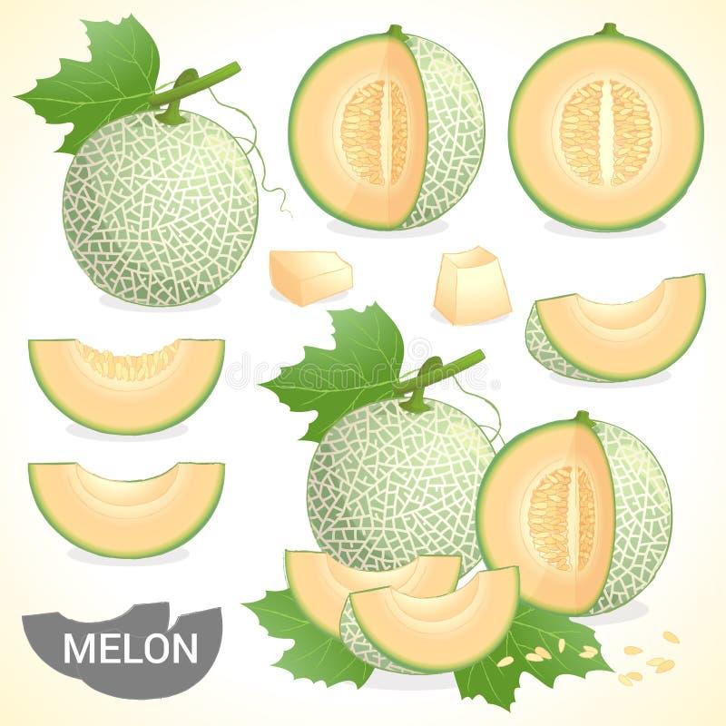 L'ensemble de fruit de melon de cantaloup dans divers styles dirigent le format illustration de vecteur
