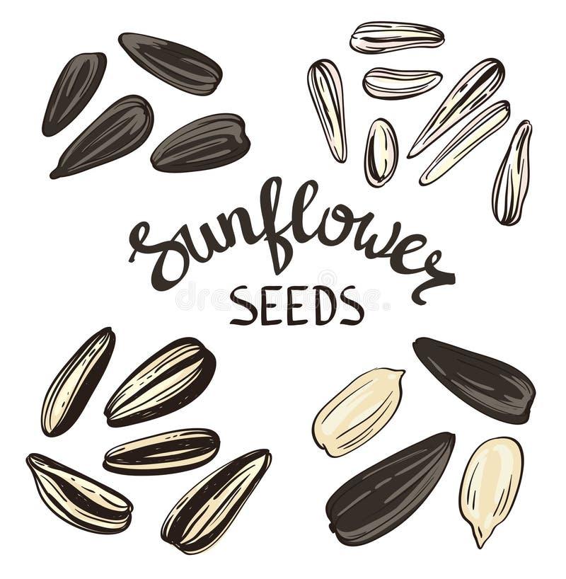 L'ensemble de graines de tournesol avec le vintage a stylisé le lettrage illustration stock