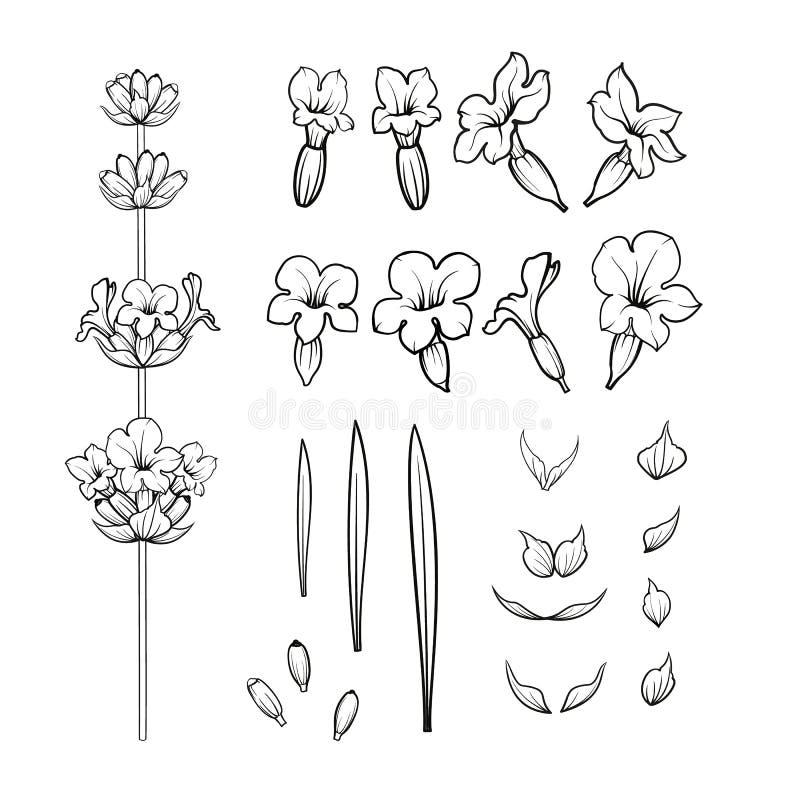 L'ensemble de lavande fleurit des éléments illustration stock