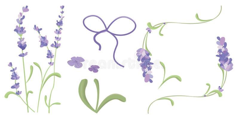 L'ensemble de lavande fleurit des ?l?ments Illustration botanique La collection de lavande fleurit sur un fond blanc Vecteur illustration libre de droits