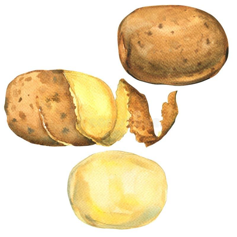 L'ensemble de pommes de terre a épluché, en peau, isolé entier, illustration d'aquarelle illustration de vecteur