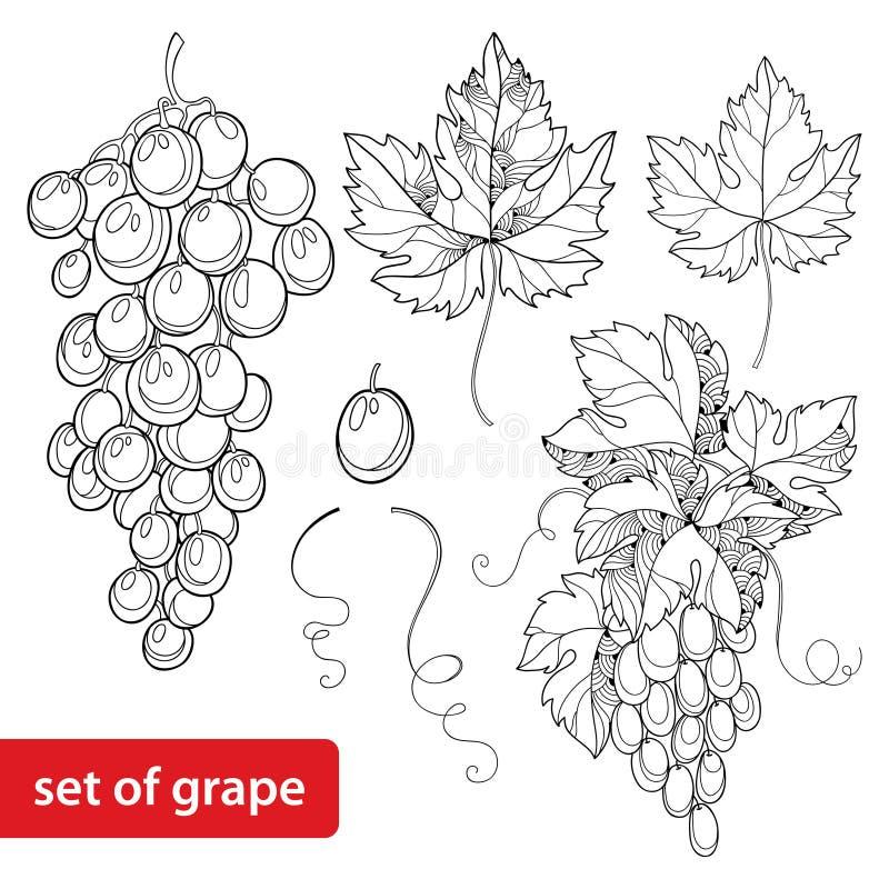 L'ensemble de vecteur avec le groupe fleuri de raisin et de raisin part dans le noir sur le fond blanc illustration de vecteur