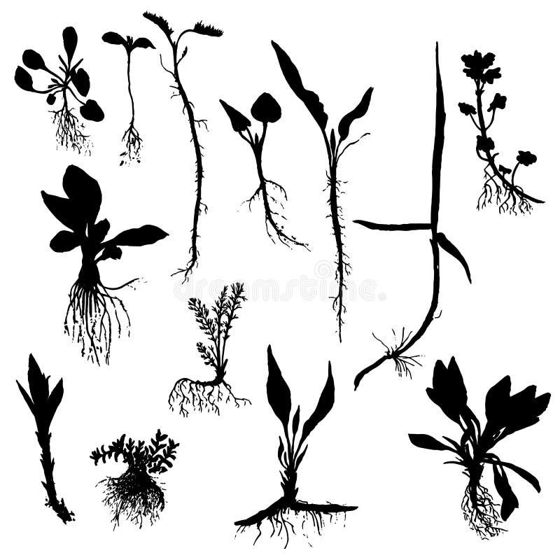 Préférence L'ensemble De Vecteur De Dessin Plante Des Silhouettes Avec Des  RP11