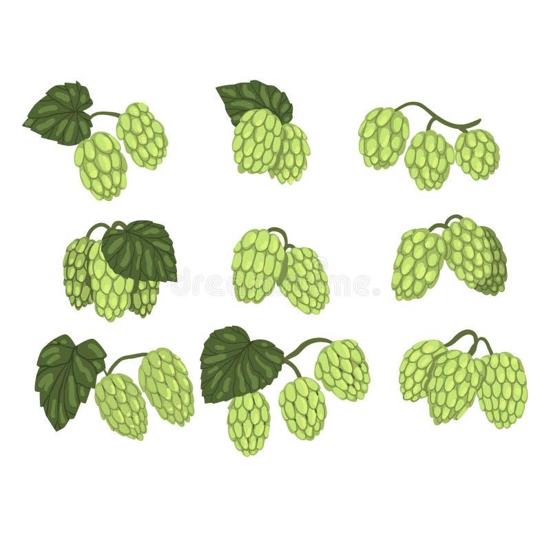 L'ensemble tiré par la main de vecteur de houblon en cônes vert s'embranche avec des feuilles Secteur de la brasserie Élément nat illustration libre de droits