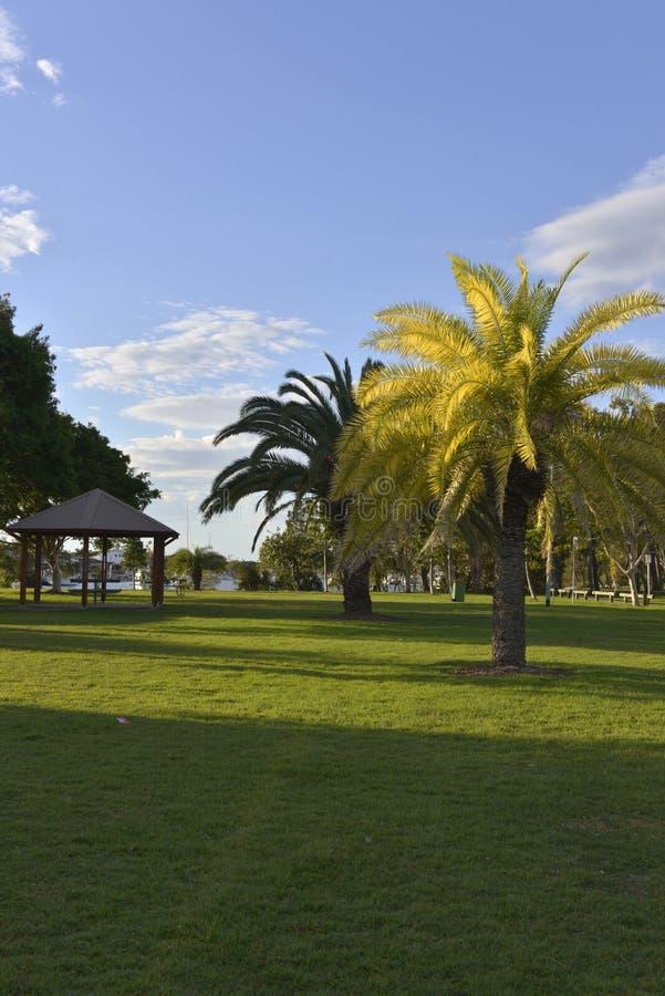 l'Ensoleillé-soirée-dans-un-parc-avec-un-paume-arbre-allumer-par-le-soleil images stock