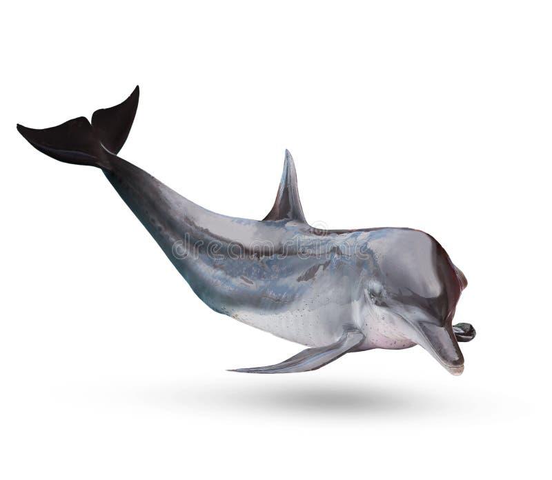 L'ente completo del dolphine del mare ha isolato il fondo bianco fotografia stock