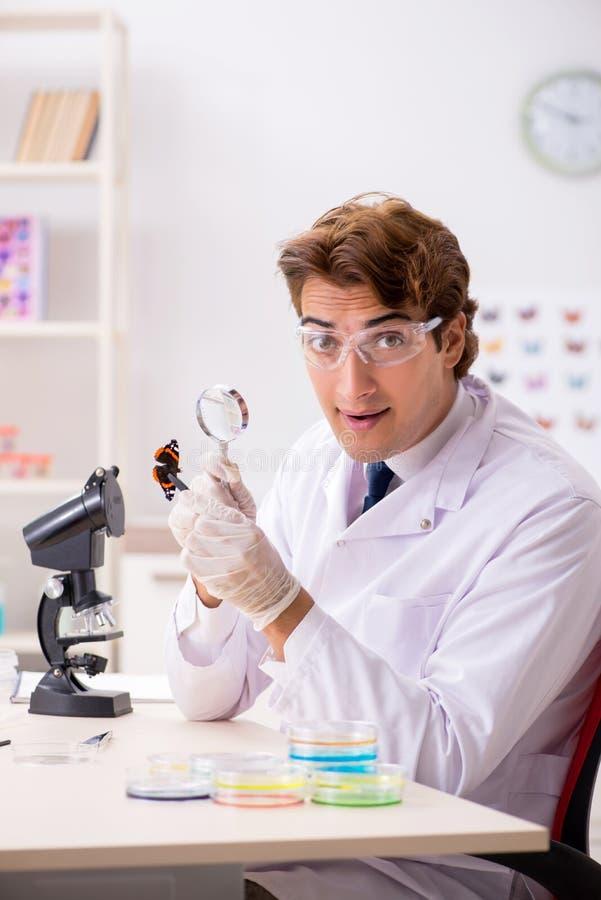 L'entomologo dello scienziato che studia le nuove specie della farfalla immagine stock libera da diritti