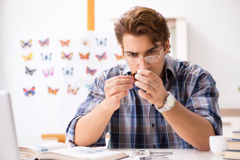 L'entomologo dello studente che studia le nuove specie di farfalle immagine stock