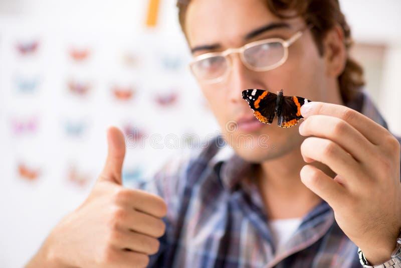 L'entomologo dello studente che studia le nuove specie di farfalle fotografie stock