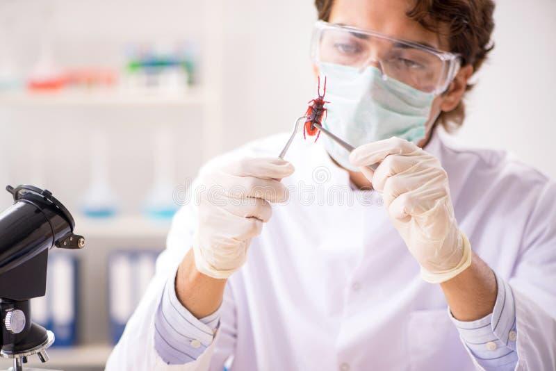 L'entomologo maschio che lavora nel laboratorio sulle nuove specie immagini stock libere da diritti