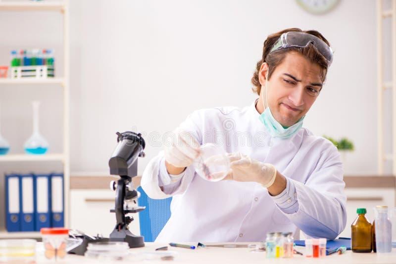 L'entomologo maschio che lavora nel laboratorio sulle nuove specie fotografie stock