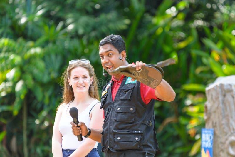 L'entraîneur d'oiseau présente les oiseaux d'exposition de la proie photographie stock