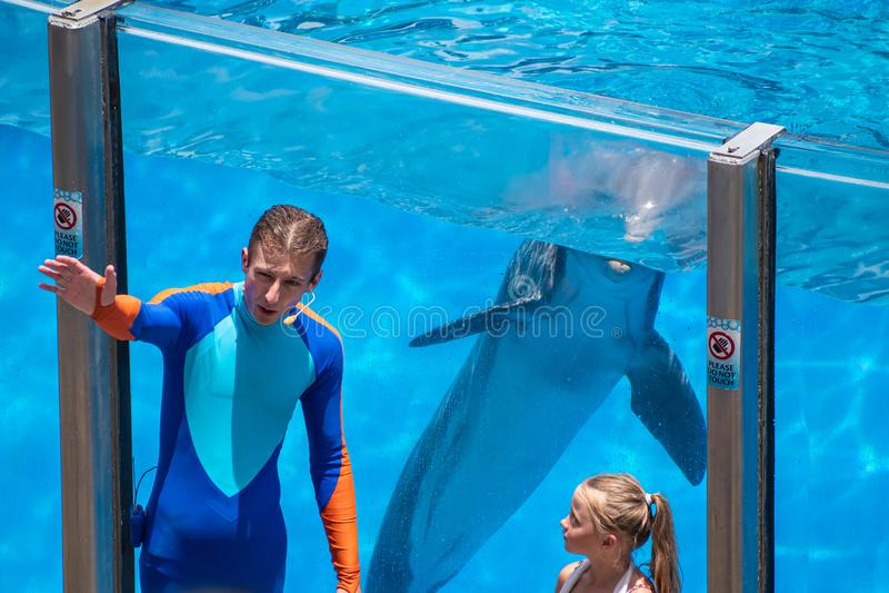 L'entraîneur montre à dauphin comment indiquer bonjour tandis que peu de fille observe chez Seaworld image libre de droits