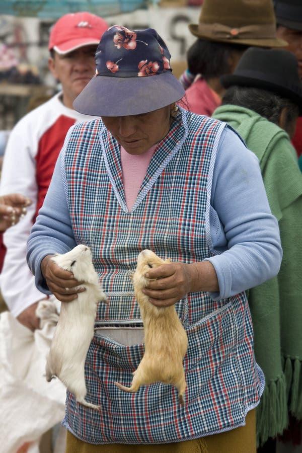 l'Equateur - le bétail lance sur le marché dans Saquisili   images libres de droits