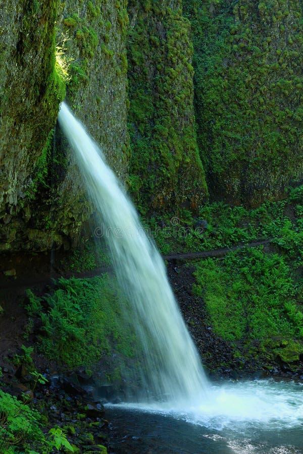 L'equiseto superiore cade nella gola del fiume Columbia, Oregon immagini stock
