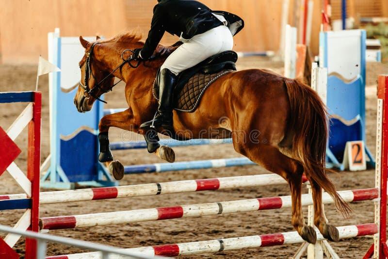 L'equites sul cavallo salta immagini stock