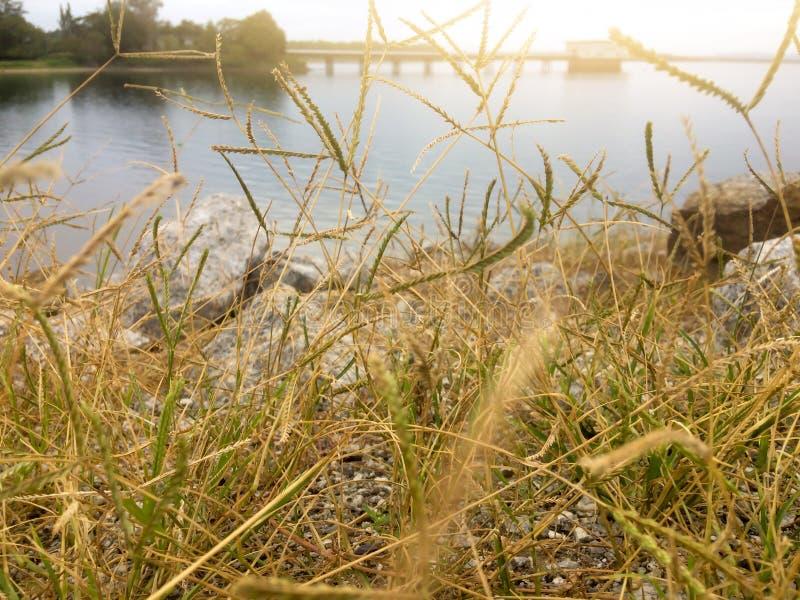 L'erba è asciutta sul bacino idrico immagini stock