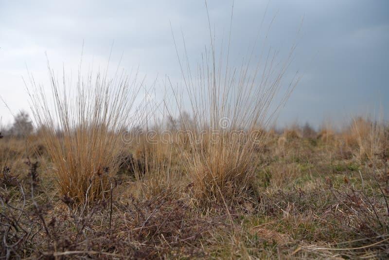 L'erba appassita della paglia su un asciutto attracca immagini stock libere da diritti