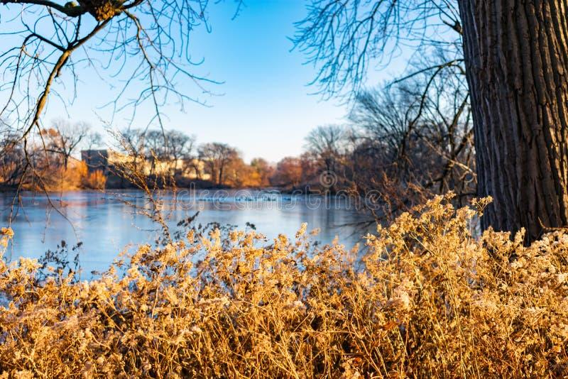 L'erba di prateria indigena nel pomeriggio espone al sole lo stagno del nord circostante in Lincoln Park Chicago fotografia stock libera da diritti