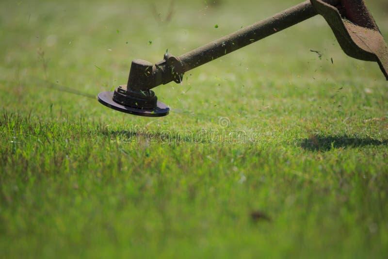 L'erba di taglio del giardiniere dalla falciatrice da giardino immagine stock