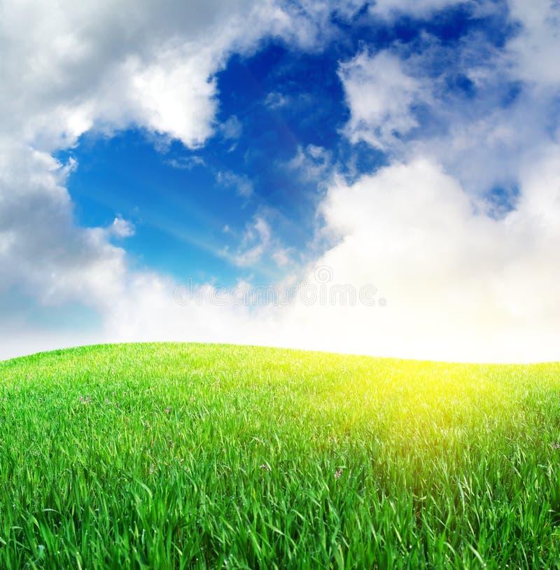 L'erba ed il cuore firmano dentro il cielo fotografia stock