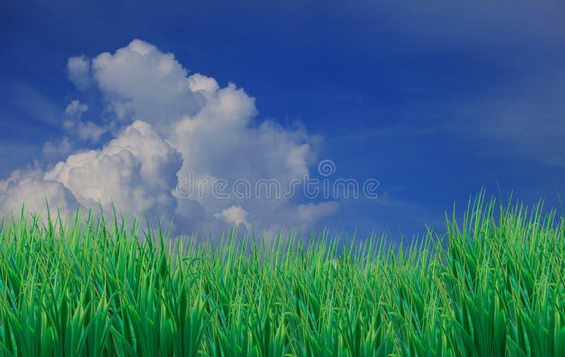 L'erba verde lascia il bianco anteriore del cielo blu e di messa a terra fotografie stock libere da diritti