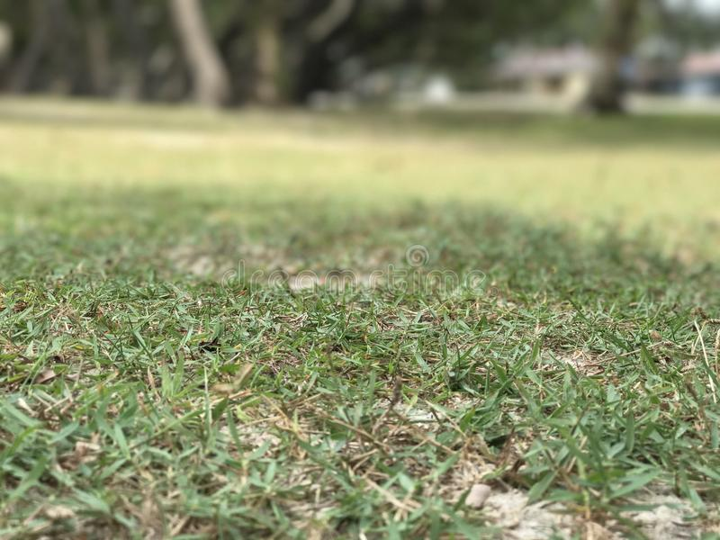 L'erba vergine immagini stock