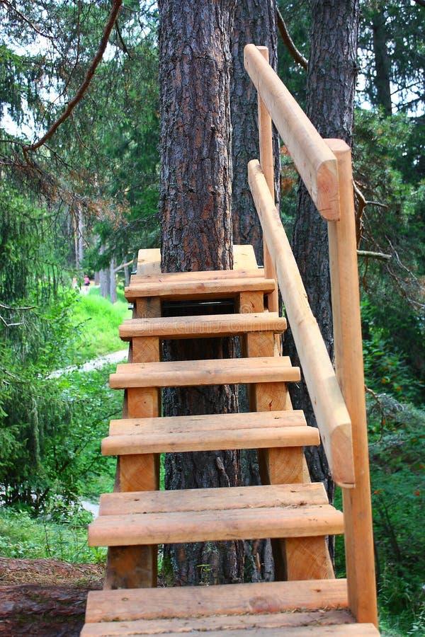 L'escalier dans la forêt photographie stock