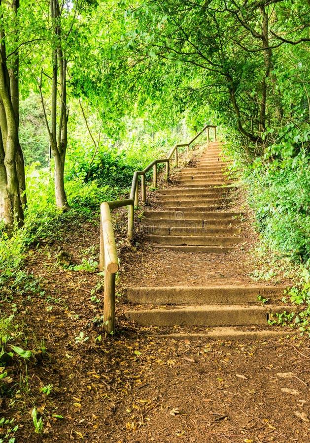 L'escalier de chemin fait un pas au bord de la forêt verte photographie stock
