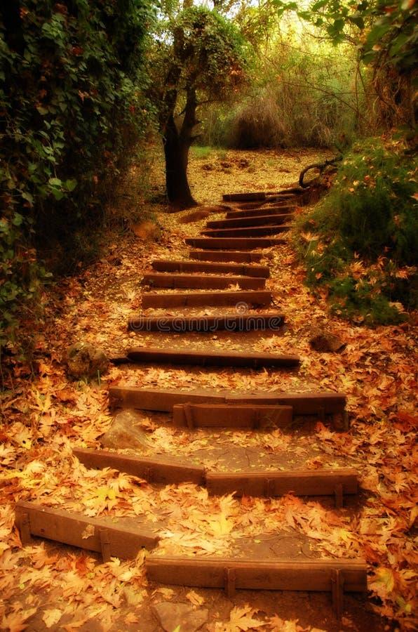 L'escalier de la nature photographie stock