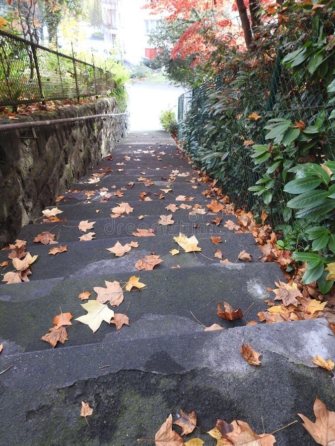 Download L'escalier De La Propriété En Automne Est Dangereux Avec Les Feuilles Mortes Photo stock - Image du canalisation, automne: 87705226