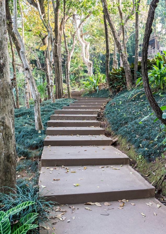 Escalier En Béton Le Long De La Traînée Naturelle Photo ...