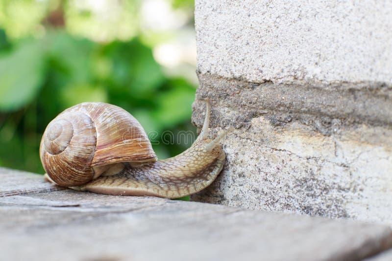 L'escargot escalade le mur photo libre de droits