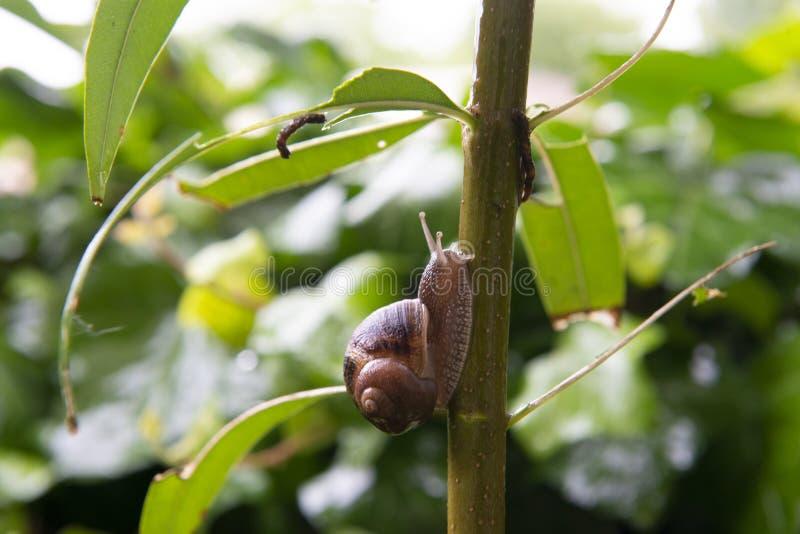 L'escargot monte une branche images stock
