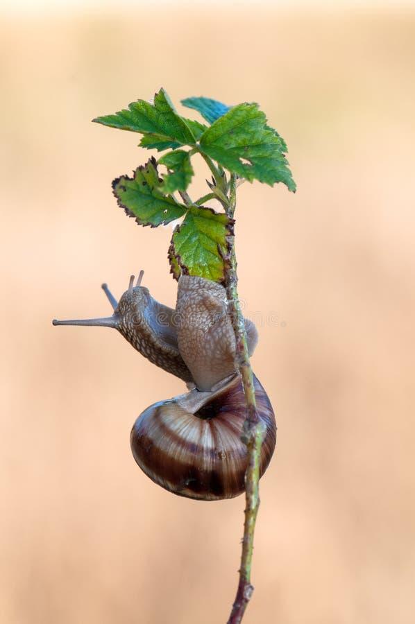L'escargot se reposent sur une usine de forêt photo stock