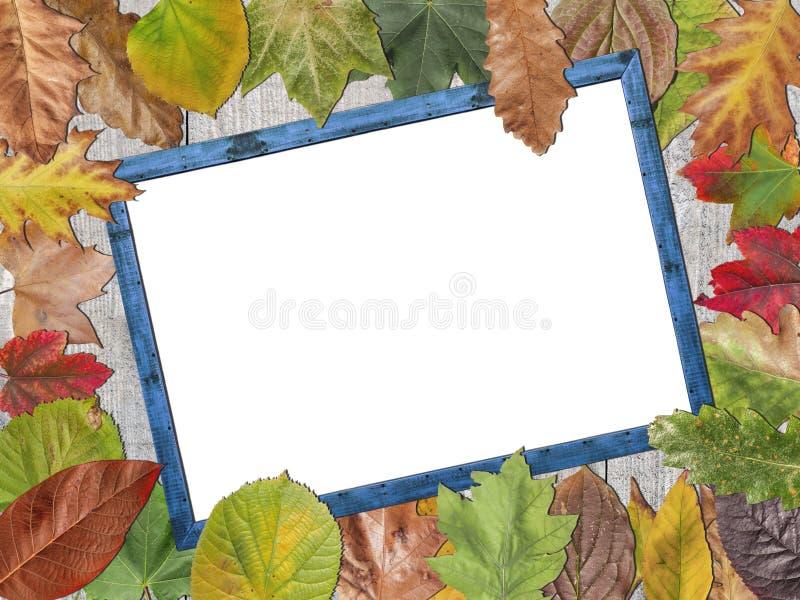L'espace blanc coloré de copie de feuilles d'automne sur le cadre de tableau en bois bleu image stock