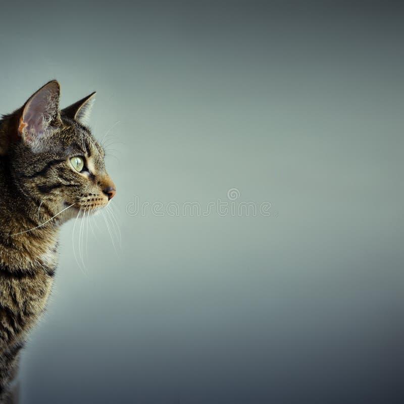 l'espace de copie de chat photo libre de droits