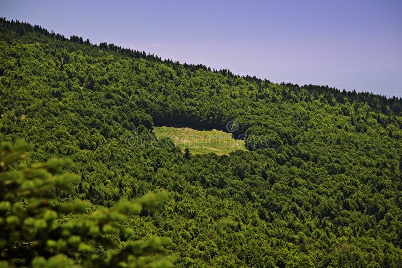 l'espace vide de pin de forêt photographie stock libre de droits