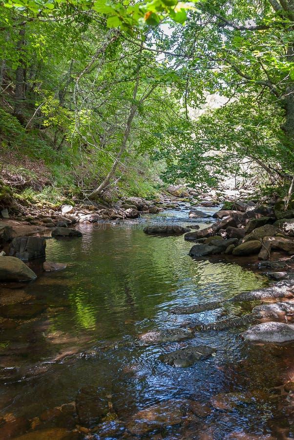 l'espagne Rivière et forêt de montagne de Palencia Palencia images libres de droits