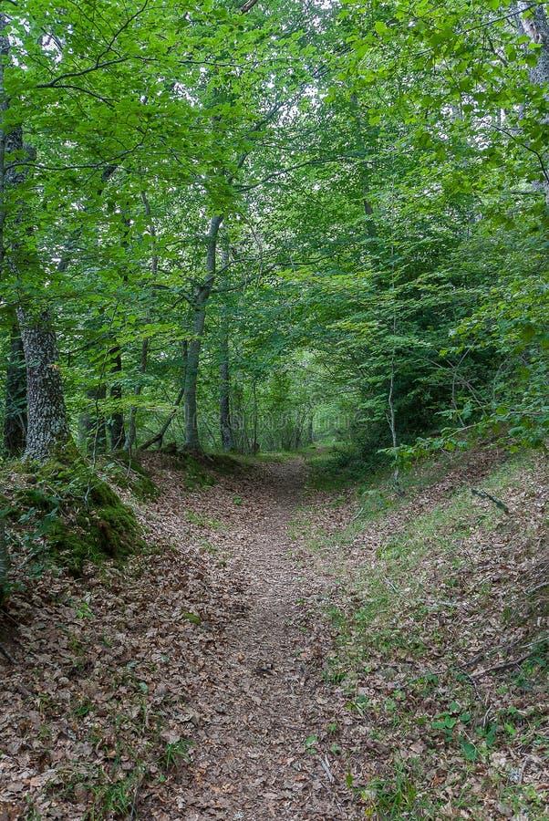 l'espagne Sentier de randonnée de La Pedrosa dans les montagnes de Palencia Palencia photos libres de droits