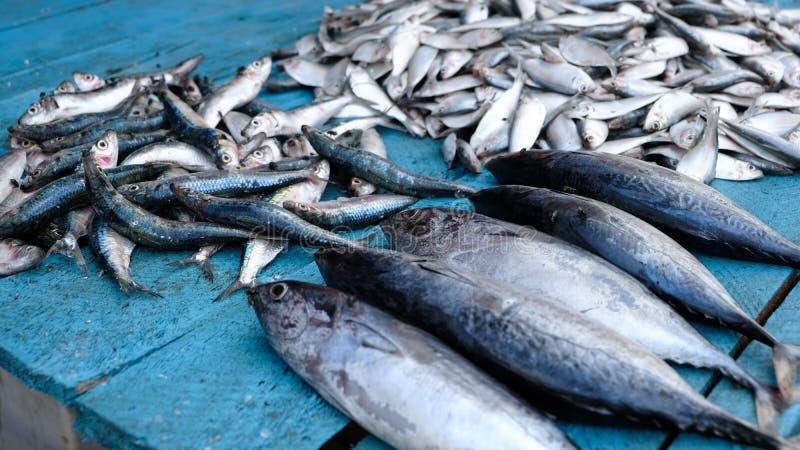 L'essence des poissonneries de Galle images libres de droits