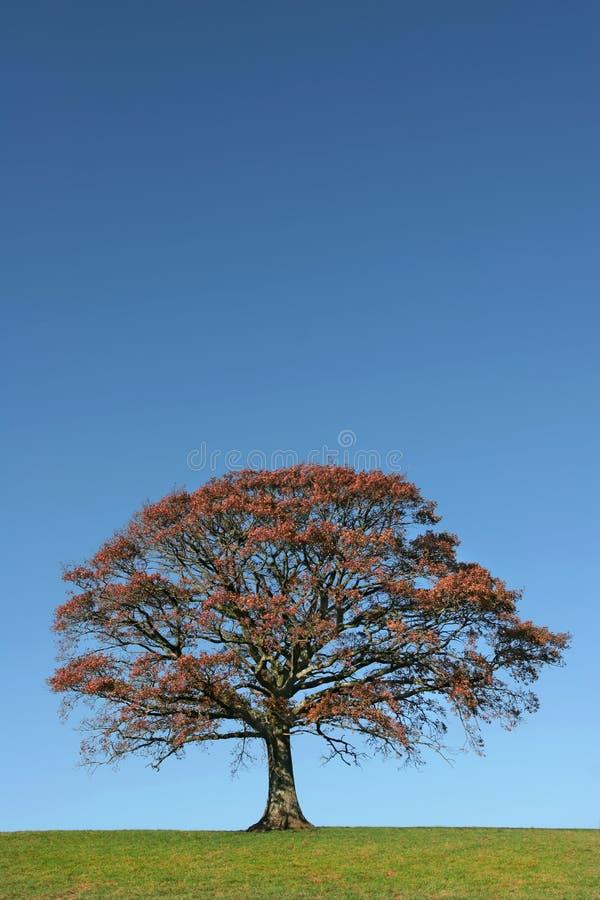 L'essenza dell'autunno immagine stock