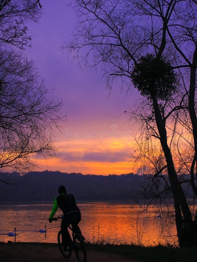 L'Essonne Francia: Un ciclista nel bello paesaggio al tramonto con i cigni su acqua immagine stock